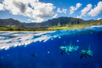 """Into the Blue"" - WestSide, Oahu"