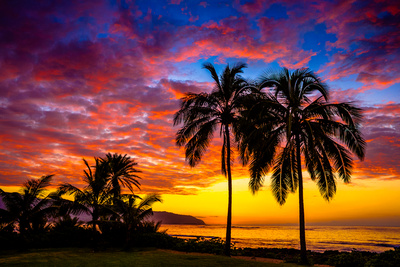 """""""Paradise"""" - Haleiwa, Oahu"""